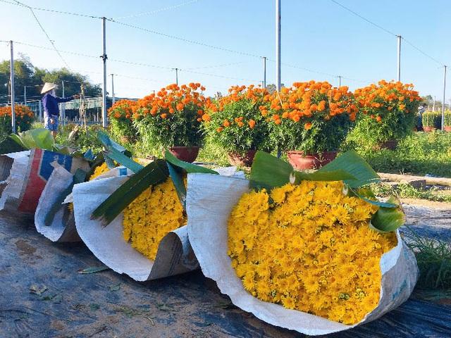 Đà Nẵng: Làng Nhơn Thọ ăn Tết to do bán hoa đắt hàng - 7