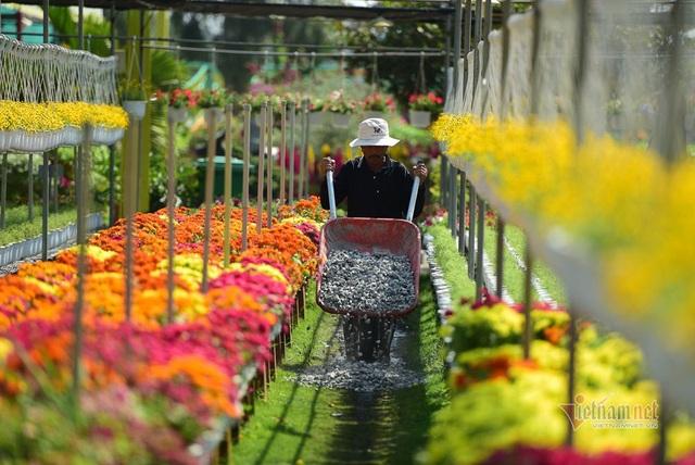 Ngàn màu rực rỡ, làng hoa lớn nhất miền Tây đốn tim khách phương xa - 9