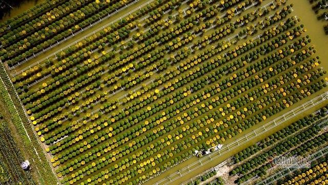 Ngàn màu rực rỡ, làng hoa lớn nhất miền Tây đốn tim khách phương xa - 11