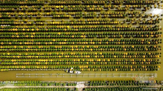 Ngàn màu rực rỡ, làng hoa lớn nhất miền Tây đốn tim khách phương xa - 14