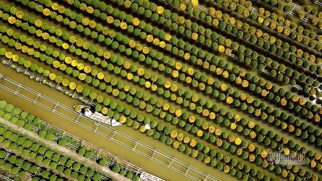 Ngàn màu rực rỡ, làng hoa lớn nhất miền Tây đốn tim khách phương xa - 15