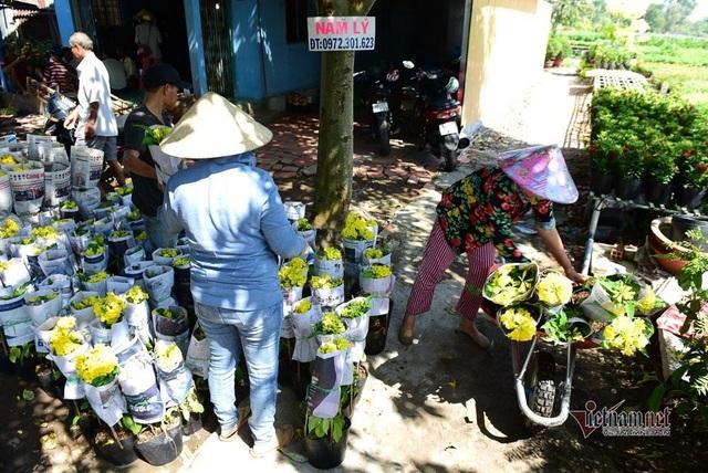 Ngàn màu rực rỡ, làng hoa lớn nhất miền Tây đốn tim khách phương xa - 17