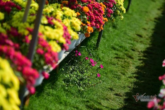 Ngàn màu rực rỡ, làng hoa lớn nhất miền Tây đốn tim khách phương xa - 2