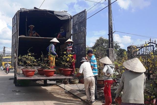 """Bình Định: Phụ nữ nông thôn kiếm bộn tiền nhờ """"bốc"""" mai ngày Tết - 1"""