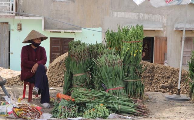 """Phú Yên: Giá hoa lay ơn """"rẻ bèo"""" khiến nông dân lo lắng ngày giáp Tết - 10"""