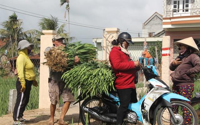 """Phú Yên: Giá hoa lay ơn """"rẻ bèo"""" khiến nông dân lo lắng ngày giáp Tết - 8"""