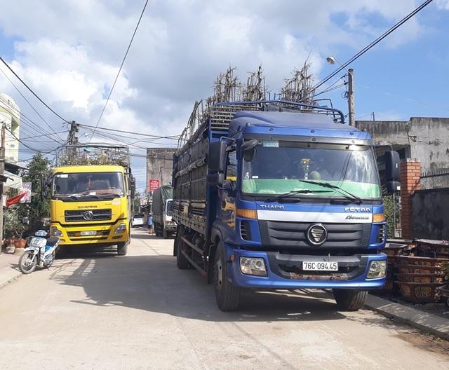 """Bình Định: Phụ nữ nông thôn kiếm bộn tiền nhờ """"bốc"""" mai ngày Tết - 2"""