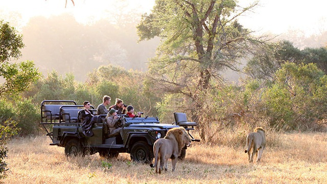 Đôi sư tử chạy thục mạng khi bị bầy voi truy sát - 3