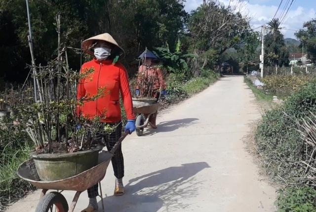 """Bình Định: Phụ nữ nông thôn kiếm bộn tiền nhờ """"bốc"""" mai ngày Tết - 4"""