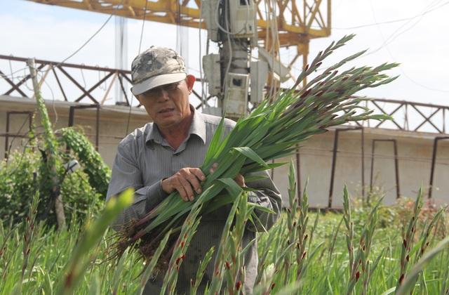 """Phú Yên: Giá hoa lay ơn """"rẻ bèo"""" khiến nông dân lo lắng ngày giáp Tết - 5"""