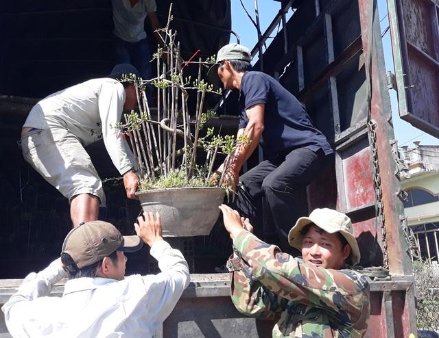 """Bình Định: Phụ nữ nông thôn kiếm bộn tiền nhờ """"bốc"""" mai ngày Tết - 5"""