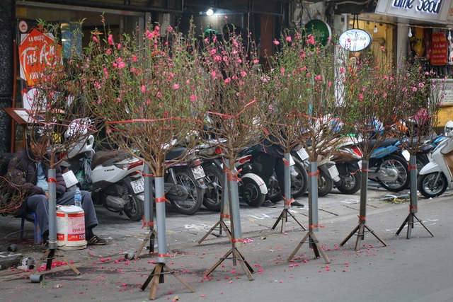Dòng người chen chân mua sắm Tết ở chợ hoa lâu đời nhất Hà Nội - 4