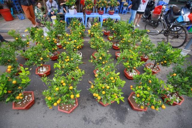 Dòng người chen chân mua sắm Tết ở chợ hoa lâu đời nhất Hà Nội - 5