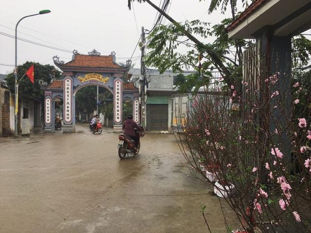 Hình ảnh người Đồng Tâm trưng đào, quất cảnh đón Tết - 2