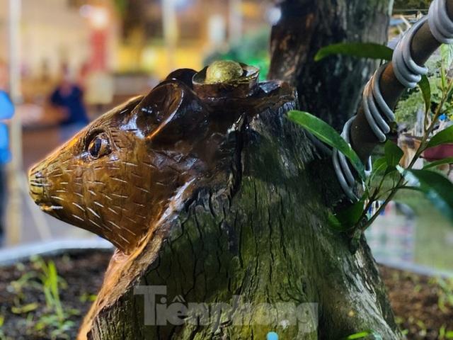 Cây khế 100 tuổi hình đầu chuột có giá nửa tỷ đồng ở Sài Gòn - 4