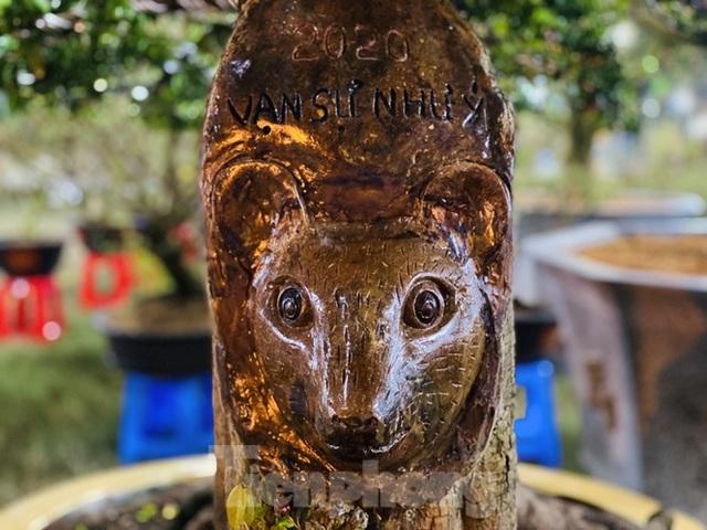 Cây khế 100 tuổi hình đầu chuột có giá nửa tỷ đồng ở Sài Gòn - 7