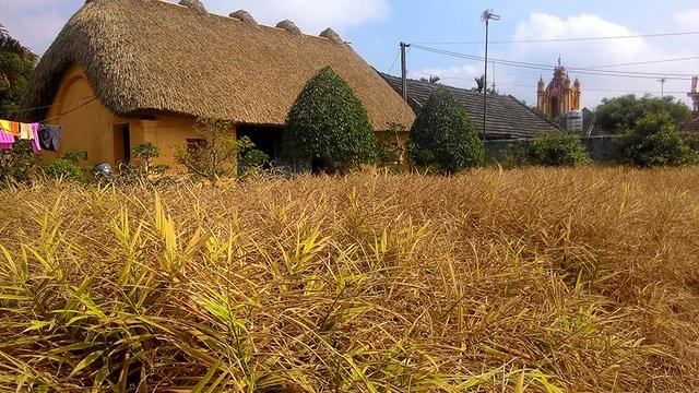 Mê mẩn với vẻ đẹp mộc mạc của ngôi nhà mái rạ ở miền quê gạo tám - 8