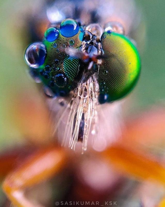 Ngắm bộ ảnh macro đẹp khó tin được thực hiện từ smartphone - 7