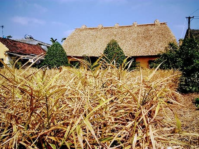 Mê mẩn với vẻ đẹp mộc mạc của ngôi nhà mái rạ ở miền quê gạo tám - 9