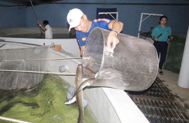 Quảng Bình: Kiếm tiềm tỷ nhờ nuôi cá chình trên cát trắng - 1