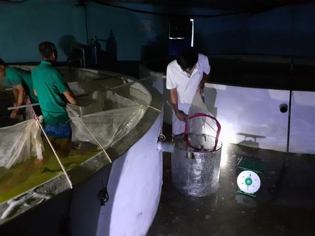 Quảng Bình: Kiếm tiềm tỷ nhờ nuôi cá chình trên cát trắng - 5