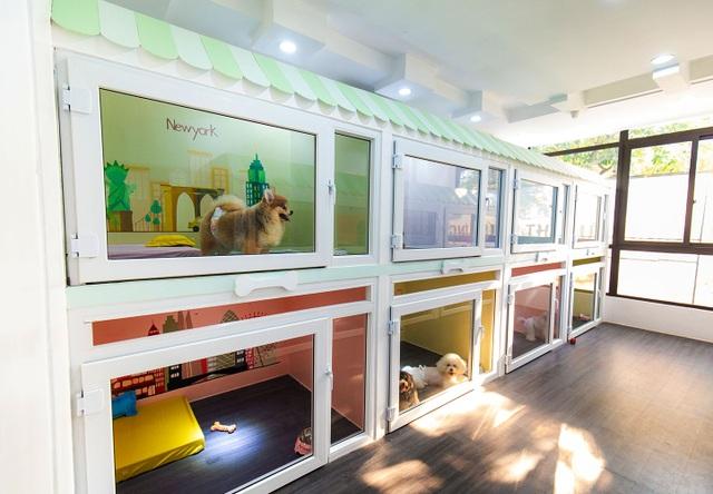 Chi nửa triệu đồng/ngày cho thú cưng đi nghỉ dưỡng ở khách sạn dịp Tết - 6