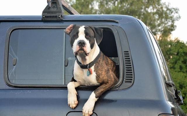 Những thói quen nguy hiểm khi lái hoặc ngồi trên xe ô tô - 12