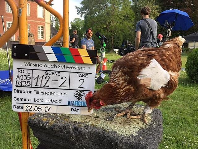 Mất một con gà, đưa nhau ra tòa, chủ gà được đền bù... 16 triệu đồng - 1