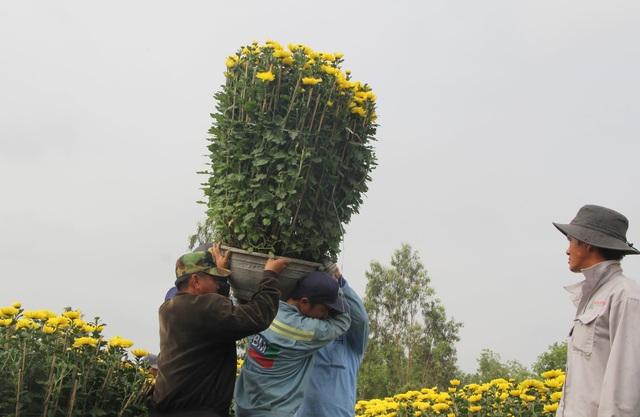 """Phú Yên: Người lao động """"còng lưng"""" kiếm tiền những ngày giáp Tết - 2"""