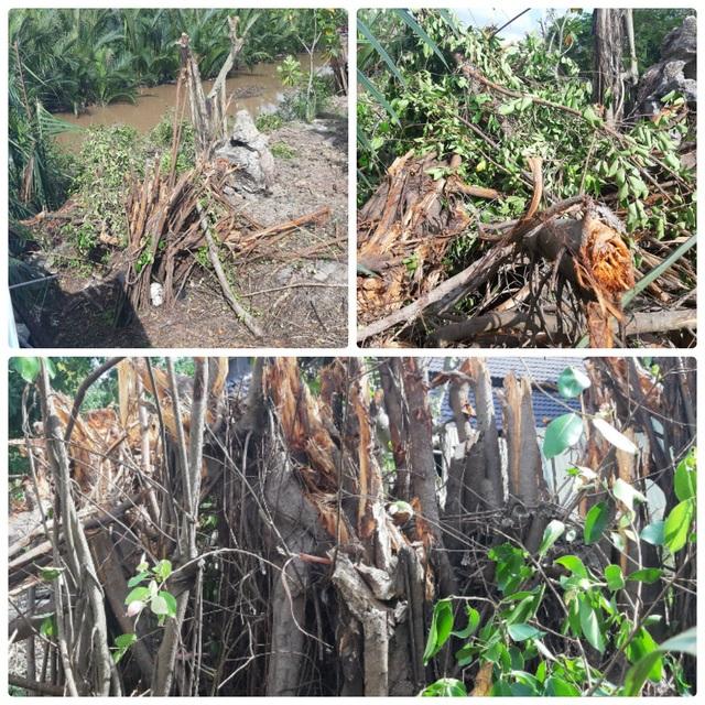 Bi hài vụ chặt cây trên đất đã mua nguy cơ ngồi tù: Tiếp tục hoãn phiên tòa! - 3