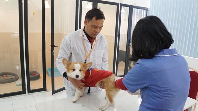 Người Hà Nội gửi thú cưng vào khách sạn để về quê ăn Tết - 6