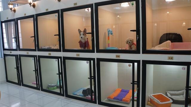 Người Hà Nội gửi thú cưng vào khách sạn để về quê ăn Tết - 5