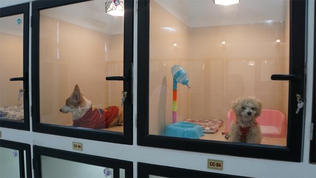 Người Hà Nội gửi thú cưng vào khách sạn để về quê ăn Tết - 4