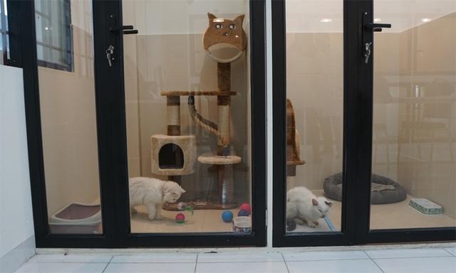 Người Hà Nội gửi thú cưng vào khách sạn để về quê ăn Tết - 3