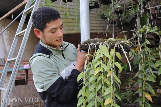 Lạ mà hay: Cho lan rừng uống nước luộc đu đủ thu hàng trăm triệu - 2