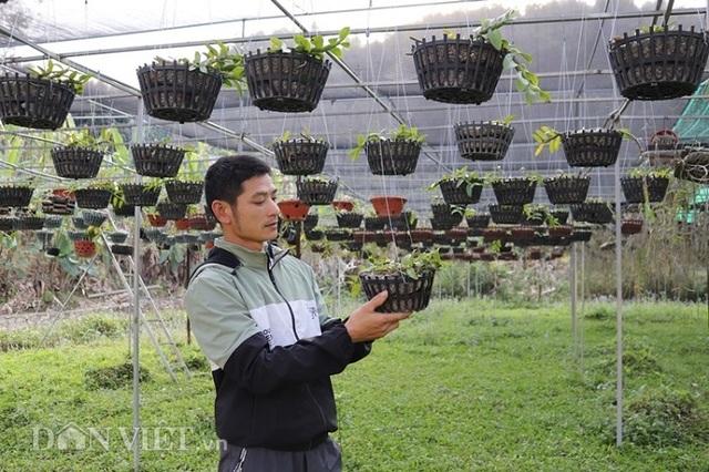 Lạ mà hay: Cho lan rừng uống nước luộc đu đủ thu hàng trăm triệu - 4