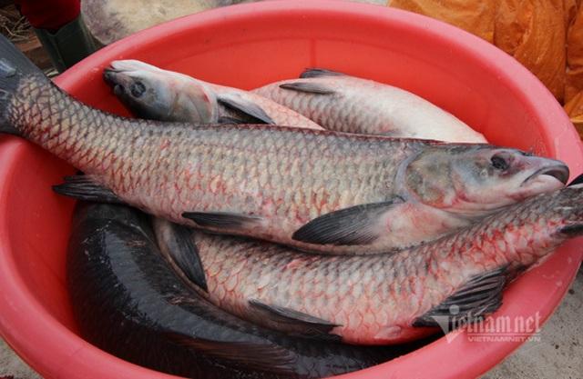Xuyên đêm hít khói, kho 5.000 nồi cá bán Tết Canh Tý - 3