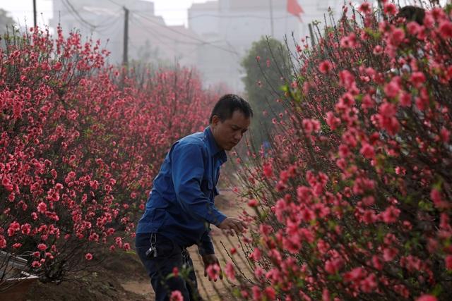 Châu Á đón Tết Âm lịch trong nỗi lo về dịch viêm phổi lạ - 19