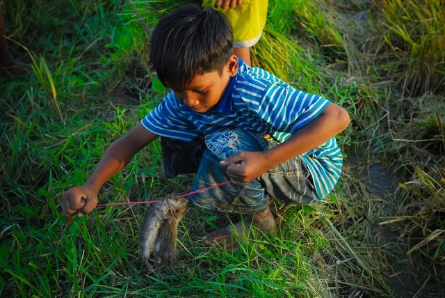 Thú vui đuổi bắt chuột trên ruộng đồng ở miền Tây - 11