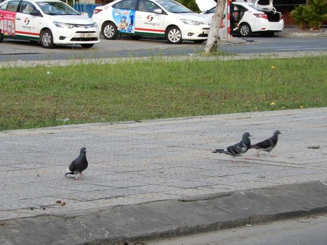 Đường phố Đà Nẵng dịu dàng sáng mùng 1 Tết - 8