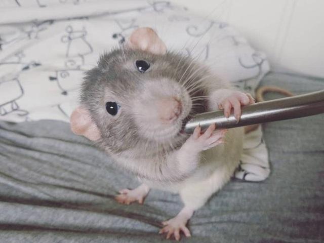 Gặp gỡ chú chuột... họa sĩ - 1