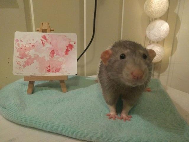 Gặp gỡ chú chuột... họa sĩ - 4