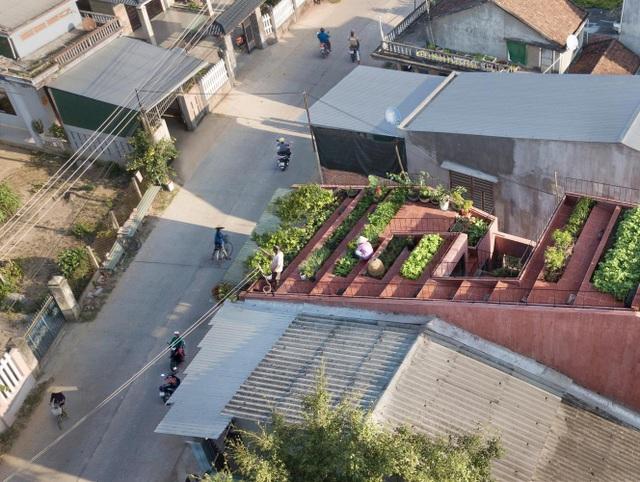 """Lạ lùng đôi vợ chồng Quảng Ngãi xây """"ruộng bậc thang"""" trên sân thượng trồng rau xanh - 1"""