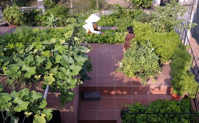 """Lạ lùng đôi vợ chồng Quảng Ngãi xây """"ruộng bậc thang"""" trên sân thượng trồng rau xanh - 5"""