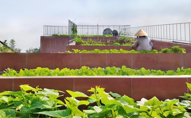 """Lạ lùng đôi vợ chồng Quảng Ngãi xây """"ruộng bậc thang"""" trên sân thượng trồng rau xanh - 7"""