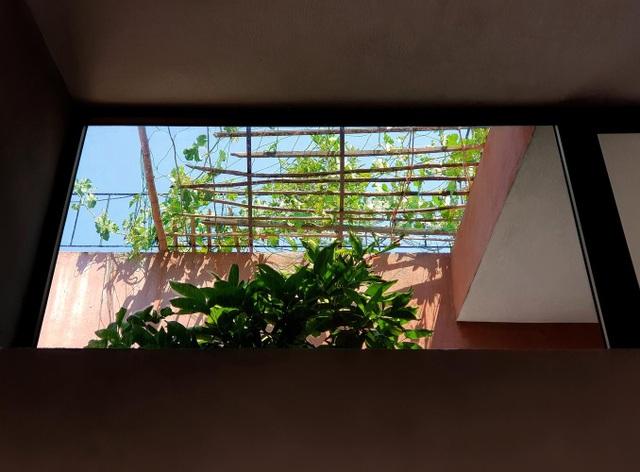"""Lạ lùng đôi vợ chồng Quảng Ngãi xây """"ruộng bậc thang"""" trên sân thượng trồng rau xanh - 6"""