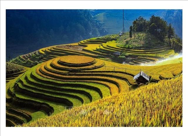 Ngắm mùa vàng trên ruộng bậc thang Mù Cang Chải - 1