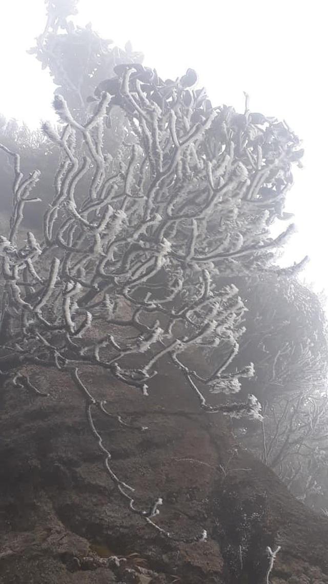 Băng tuyết phủ trắng Nóc nhà Việt Nam Fansipan - 6