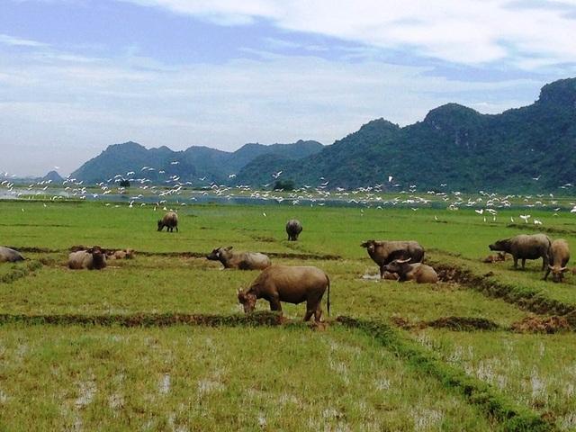 """Khách Tây đến Ninh Bình """"mê"""" làm… nông dân - 1"""