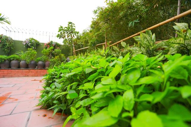 Mê mẩn căn penthouse với khu vườn ngập cây xanh đẹp hiếm có ở Hưng Yên - 13